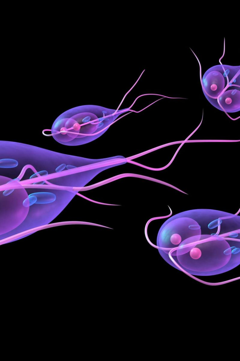 Recovering from giardia diet Giardia diet recovery