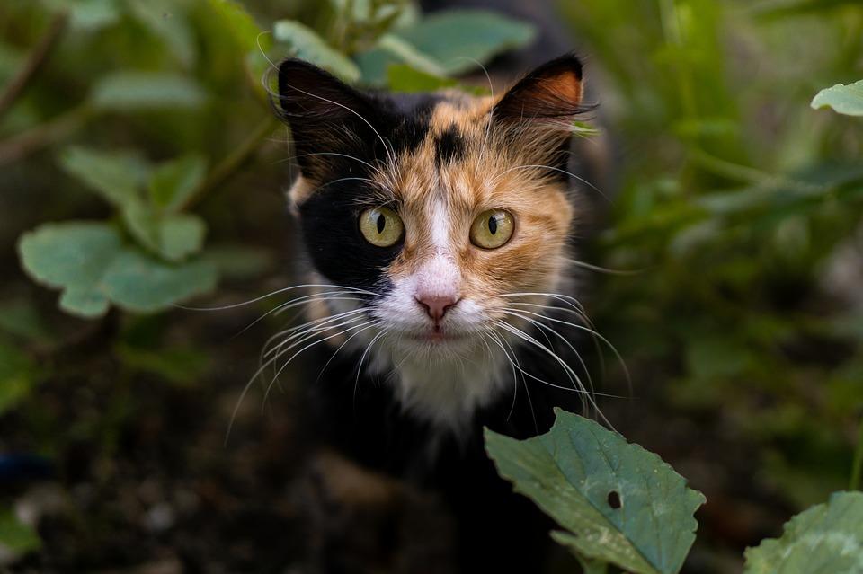 was ist giardien bei katzen)