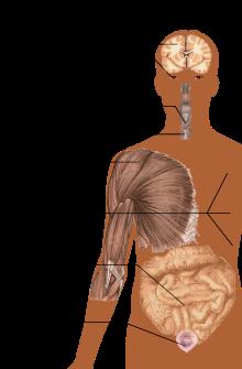 sclerosis multiplex kezelése)