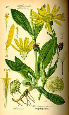 gyógynövények gyűjteménye antihelminthic)