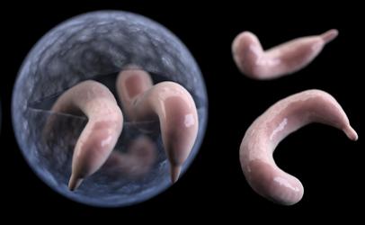 pinworm kerekesférgek lamblia, mint kezelni)