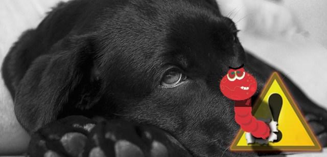 kutya férgesség kezelése