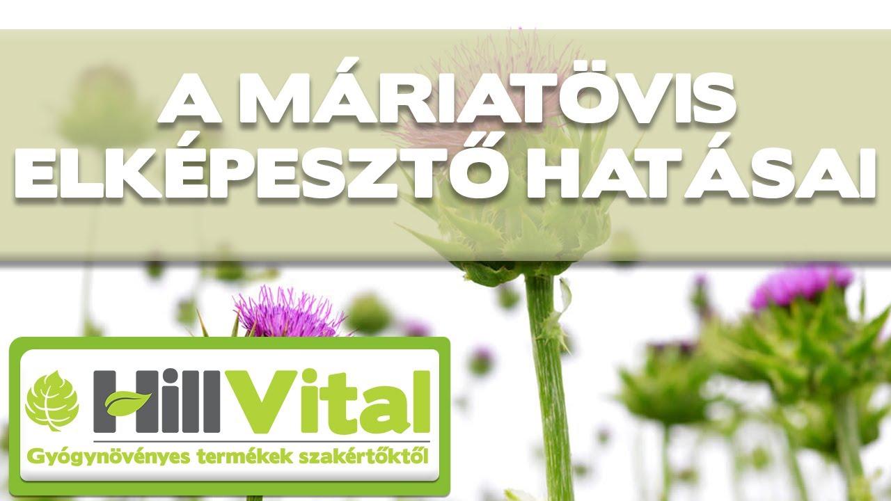 gyógynövény helminták számára)