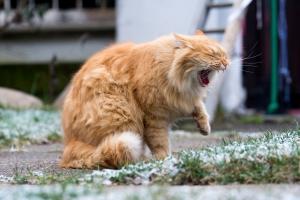 macska szívféreg tünetei