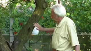 enterobiasis vizsgálat a kertben