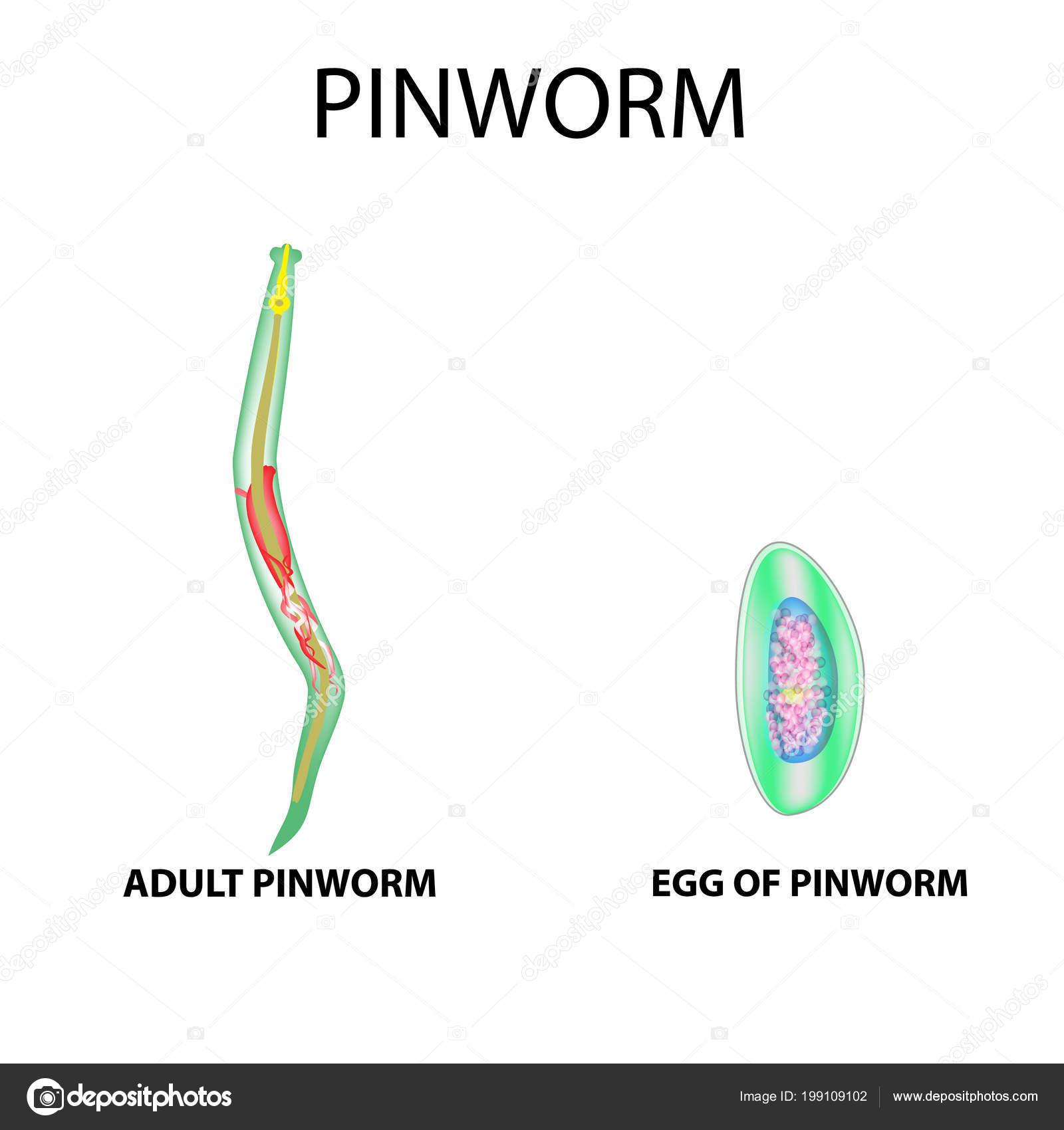 enterobiosis tojások kerek féreg féreg