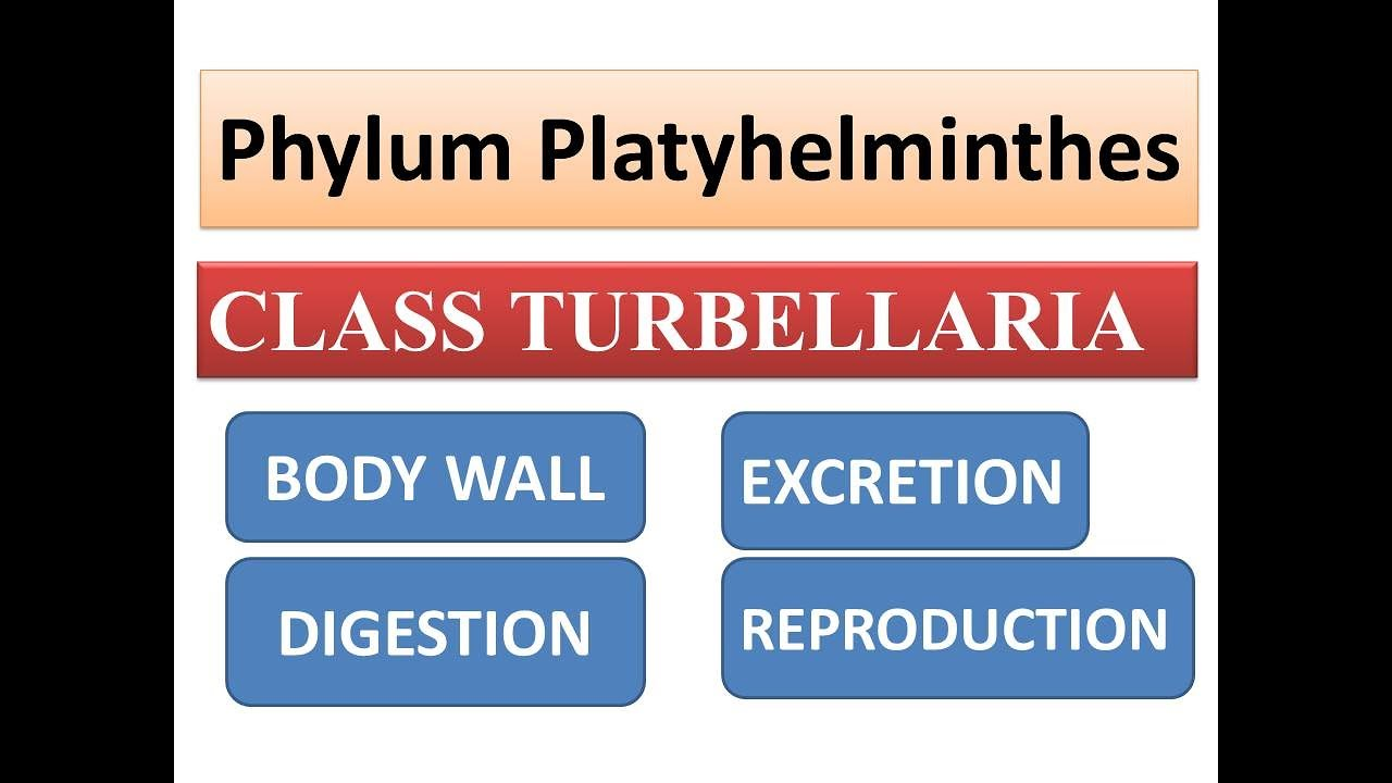 Erős tabletták a parazitákhoz és tojásukhoz Típusú helminták és tojásuk