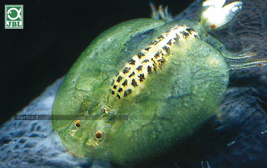 a paraziták kölcsönhatása a gazdaszervezettel