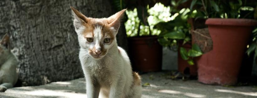 giardia gatos diarrea)
