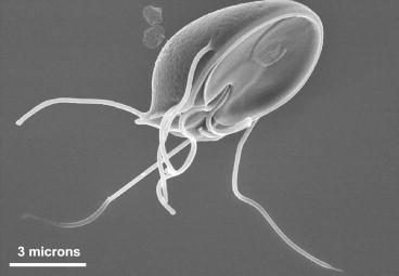 hagyományos parazitaellenes kezelés tabletták férgek komplex