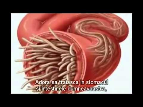 giardia simptome adulti)