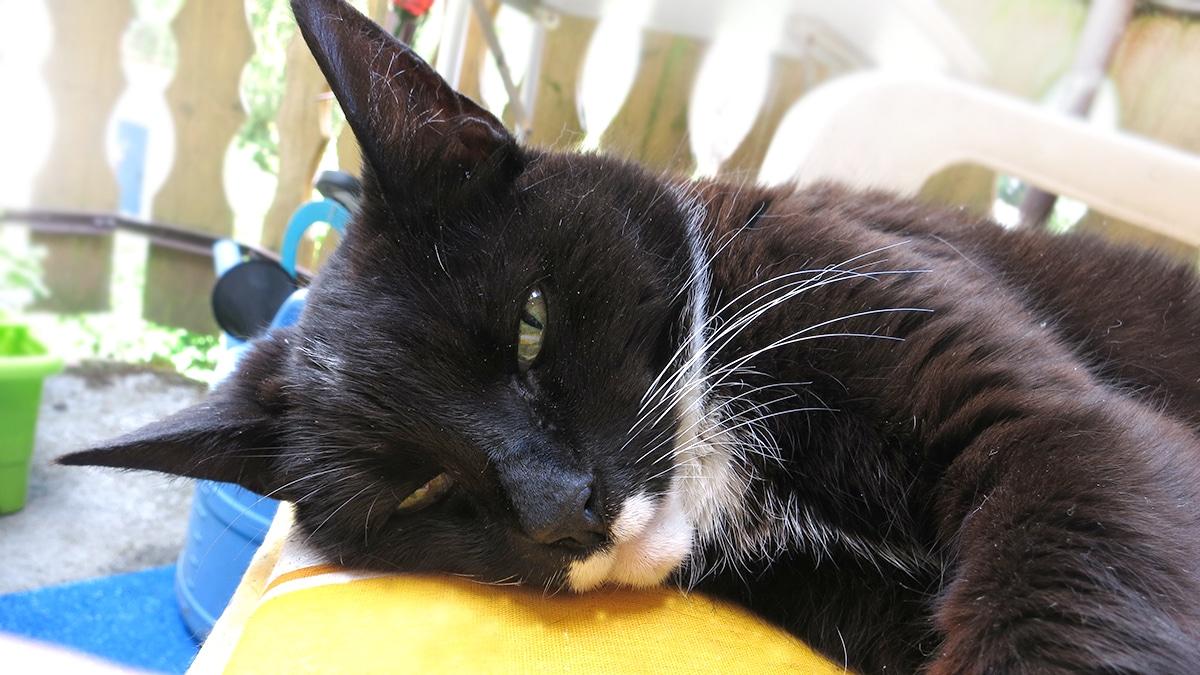 giardien katze homoopathisch behandeln