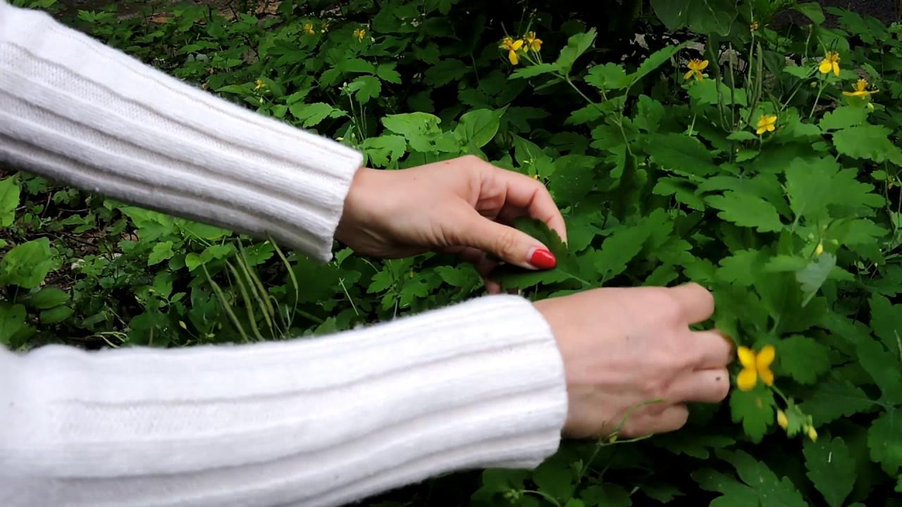 gyógynövények férgek megelőzésére