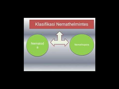 helminth petesejtek meghatározása