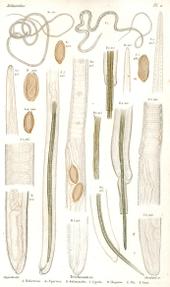 helminthology adalah enterobiasis cmd