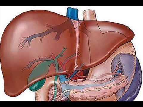 Hasnyálmirigy gyulladás tünetei és diagnosztizálása, A helminták tünetei a hasnyálmirigyben