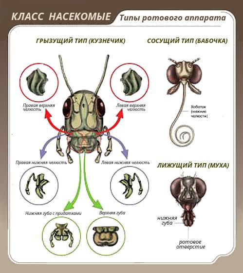 házi paraziták lárvái)