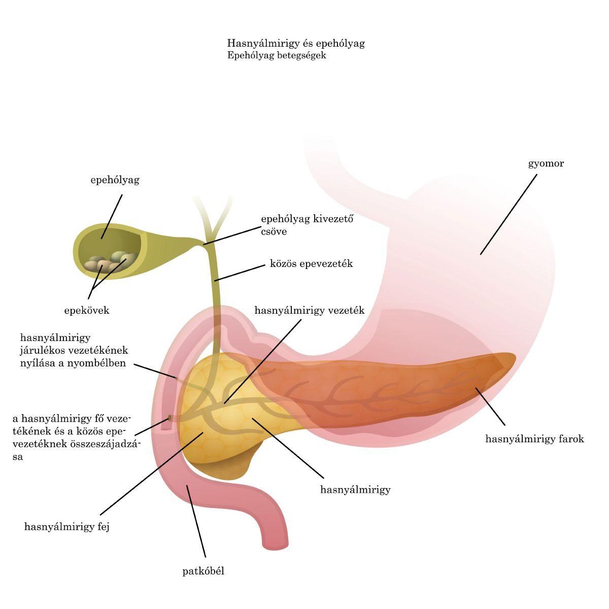 paraziták tünetei és kezelési gyógyszerei)