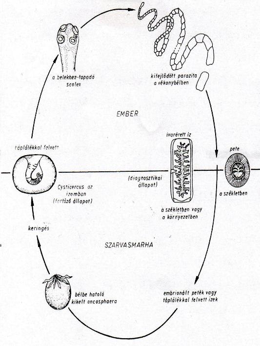 9 gyógynövény gyűjtemény a parazitákból