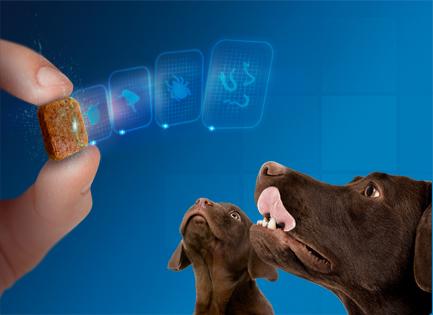 Nexgard Spectra | Murmuczok Állatgyógyászati Centrum és Patika