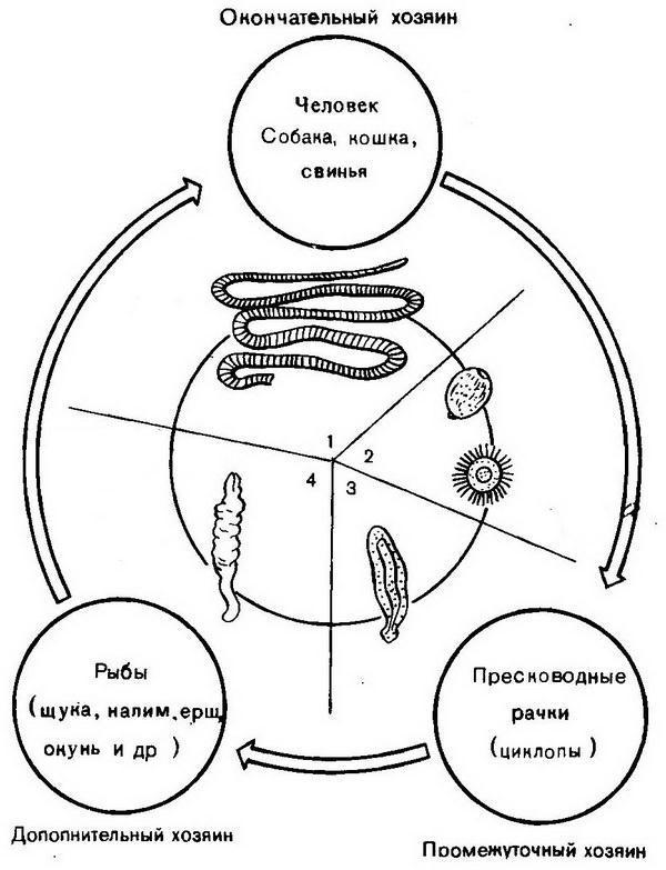 teniasis biohelminth