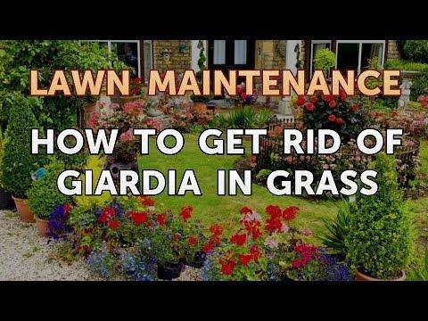 giardia yard cleaning