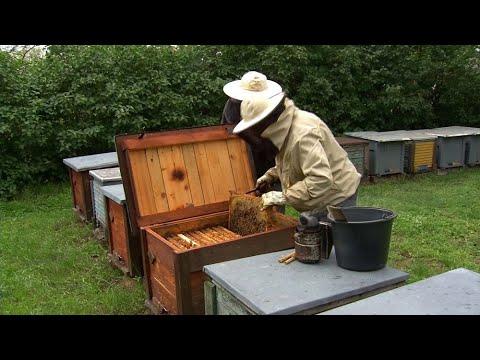 méhbetegségek és paraziták tűféreg, mely féreg kerek vagy lapos