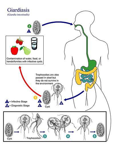 gyógynövényes tisztítás a parazitáktól tabletták férgek komplex