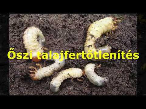 Öko növényvédő szerek pajor és fonalféreg ellen