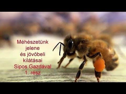 méhbetegségek és paraziták gyermekek számára féregkészítmények