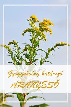 9 gyógynövény gyűjtemény a parazitákból. Mely gyógynövény-gyűjtemény hatékony a paraziták ellen