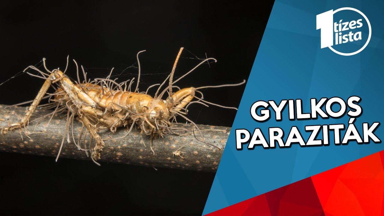 sok parazita