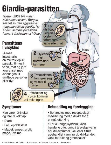 giardia symptomer hos mennesker)